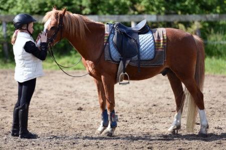 Paardeninterventie Foto Arthur Krijgsman op Pexels